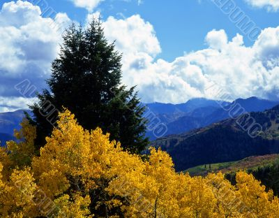 Alpine Loop Aspens