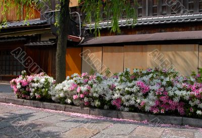 Gion spring