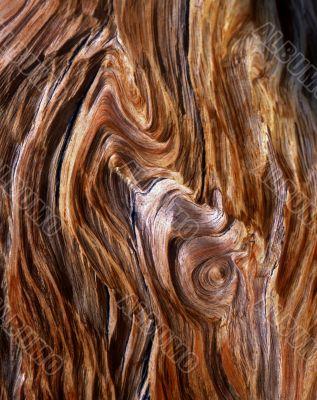 Bristlecone Pine Grain