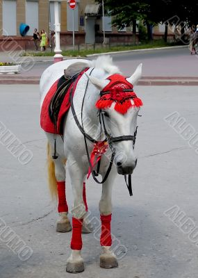 The white horse in a red hat