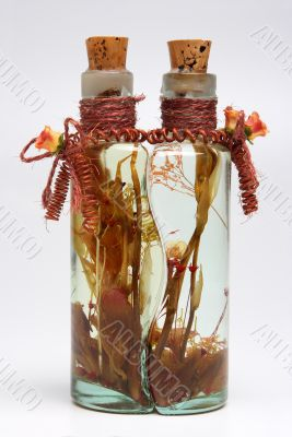 Bottle with plants 3