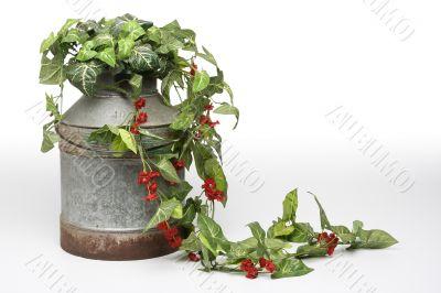 Plants on bucket 2