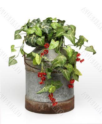 Plants on bucket