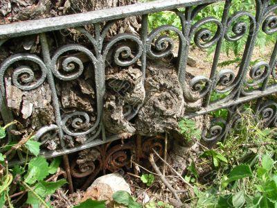 Tree and Metal Ancient Interlacing