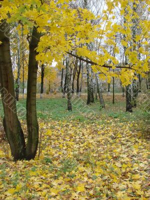 Autumn yellow alley