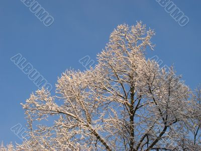 Hoarfrost on branches on blue sky background