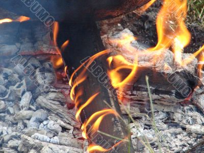 Flaming wooden coal logs of camping fireplace