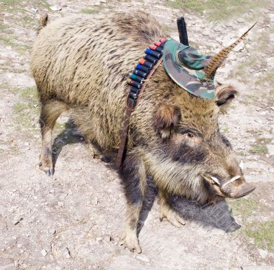 Scarecrow of a wild boar
