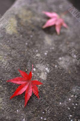 Autumn story 1