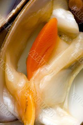 Clam close-up