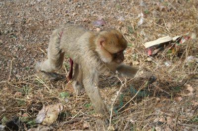Young monkey 3