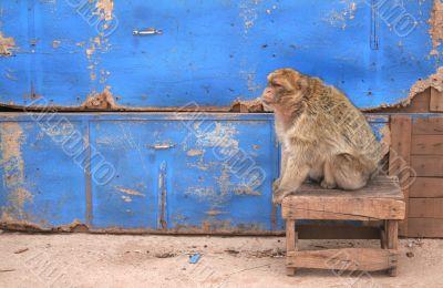 Old monkey 3