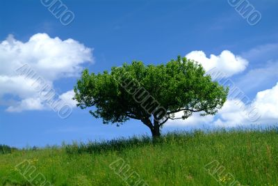 baum mit Himmel | tree and sky