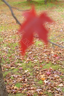 Autumn story 2