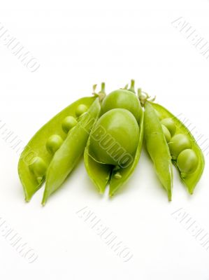 Two fruits plums in a pod of a green peas.
