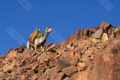 camel and sky