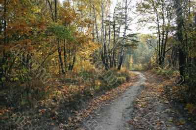 timber road by autumn