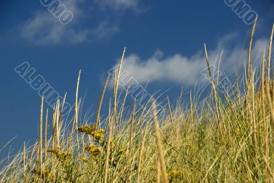 Sand Dune, Seagrass and Sky