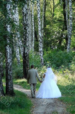 Just Married in spring white birch alley