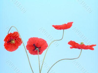 arrangement of red poppies