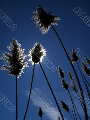 Reed and Sun
