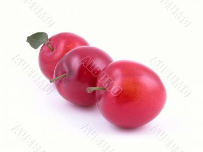 sweet red plums isolated on white