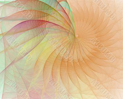 Cream Shell Spiral