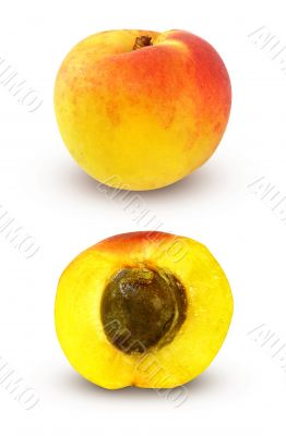 fresh apricot with cut