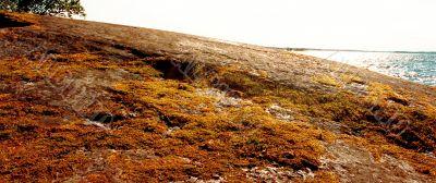 overgrown rock