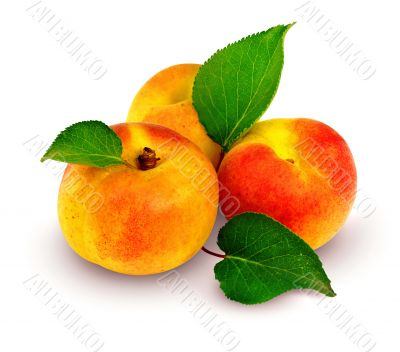 fresh apricots with green leafs