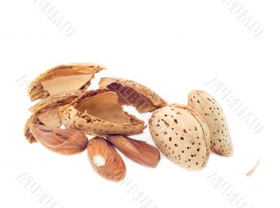 Almond nuts in a shell