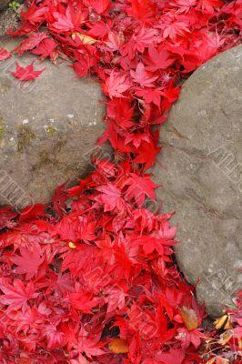 Maple leaves waterfall