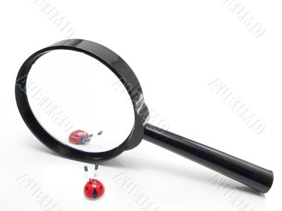 Magnifier with two ladybirds