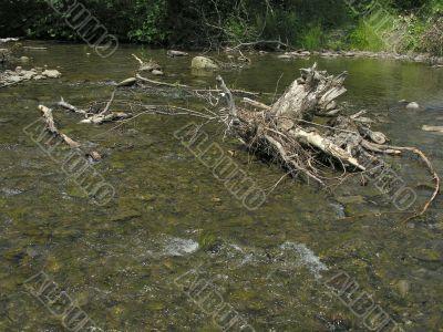 wooden stem in a mountain rivulet