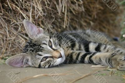 Feline Images