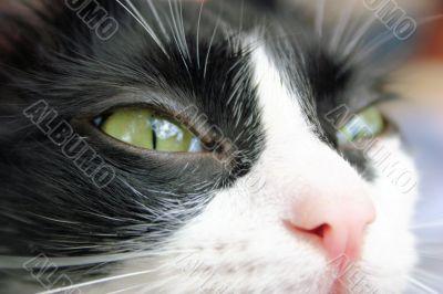 Pet Images