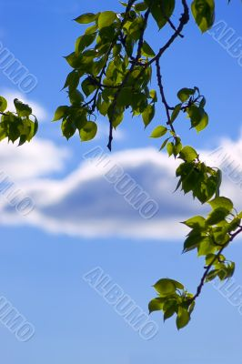 Foliage over the sky