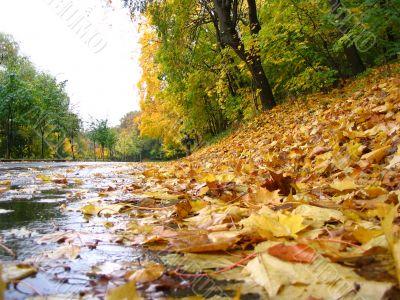 Autumn geometry