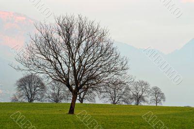 Trees on Grassland