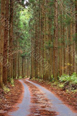 Forest autumn path
