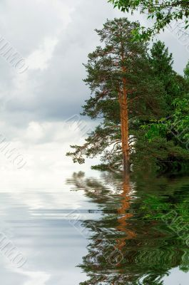 Water forest