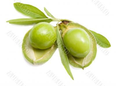 almonds with nucleus from plums