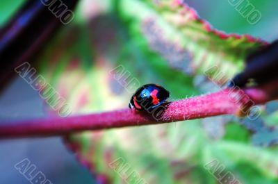 Walking ladybug along stem