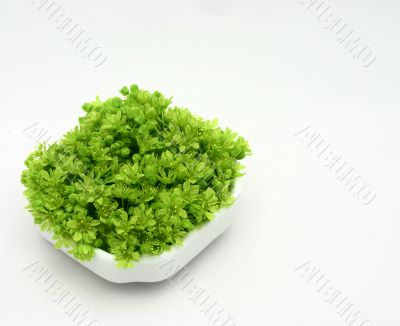 fresh green flowers