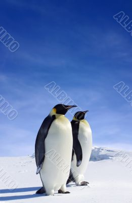 Antarctic Wildlife