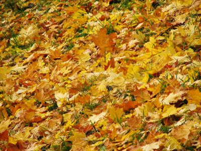 Autunm leaves on the land