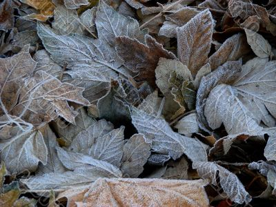 Textured hoarfrost upon red fallen leaves