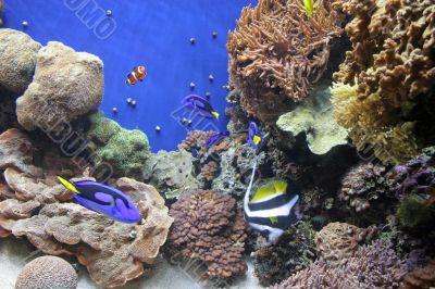 Aquarium and Clown Fish