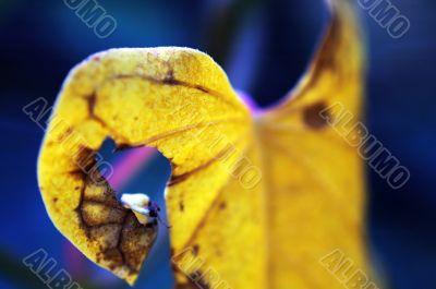 Leaf of climbing plant