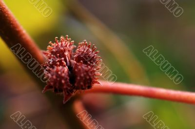 Nut, seed of plant
